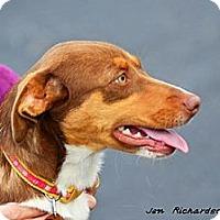 Adopt A Pet :: Ellen - PENDING, in ME - kennebunkport, ME