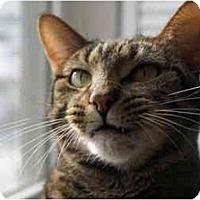 Adopt A Pet :: Julia - Xenia, OH