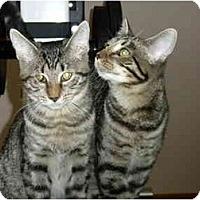 Adopt A Pet :: Gribbles - Putnam Valley, NY
