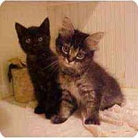 Adopt A Pet :: Babs & Sandi Kittens (Fun!) - Portland, OR
