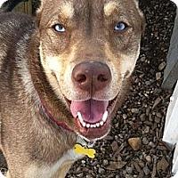 Adopt A Pet :: BLAZE - Dennis, MA