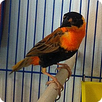 Adopt A Pet :: Zane - Lenexa, KS
