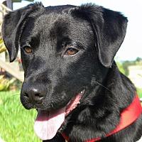 Adopt A Pet :: Wrangler - Pawling, NY