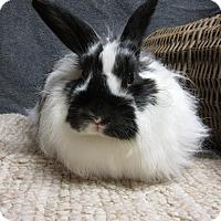 Adopt A Pet :: Clarissa - Newport, DE