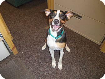 Border Collie/Labrador Retriever Mix Dog for adoption in Medford, Wisconsin - MILLIE