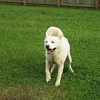 Adopt A Pet :: Mr. Goodbar - Watha, NC