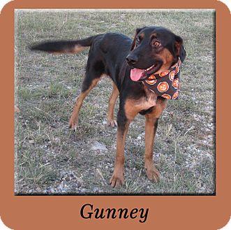 Shepherd (Unknown Type)/Rottweiler Mix Dog for adoption in Hillsboro, Texas - Gunney