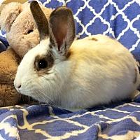 Adopt A Pet :: Lucy - Idaho Falls, ID