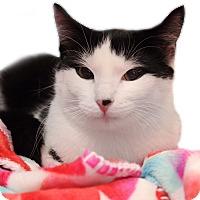 Adopt A Pet :: Brinley - Wayne, NJ