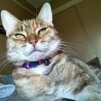 Adopt A Pet :: Tinkie - Manchester, CT