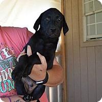 Adopt A Pet :: Frankie - South Dennis, MA