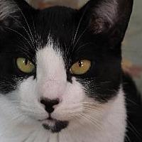 Adopt A Pet :: CHARLIE CHAN - Pt. Richmond, CA