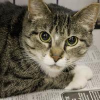 Adopt A Pet :: Ferrari - Huntingdon, PA