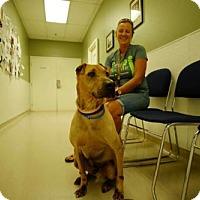 Shar Pei Dog for adoption in Lake Forest, California - Ranger