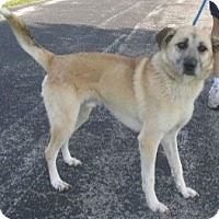 Adopt A Pet :: Harley - Mount Sterling, KY