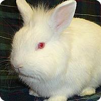Adopt A Pet :: Clancy - Newport, DE