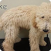 Adopt A Pet :: Port Charlotte FL - Duke - Boca Raton, FL