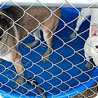 Adopt A Pet :: Bella - Woodlawn, TN