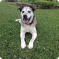 Adopt A Pet :: Harley - Carey, OH