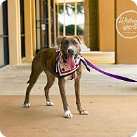 Adopt A Pet :: Sweetie - Dawson, GA