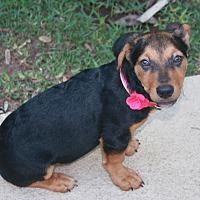 Adopt A Pet :: Cola - Nanuet, NY