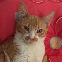 Adopt A Pet :: ANDY - Corona, CA