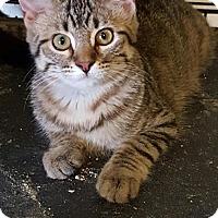Adopt A Pet :: Tinker - Fort Worth, TX