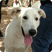 Adopt A Pet :: Misty - Cedar Crest, NM