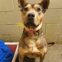Adopt A Pet :: Dixon - Aberdeen, SD