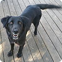 Adopt A Pet :: Juliett-B - West Hartford, CT