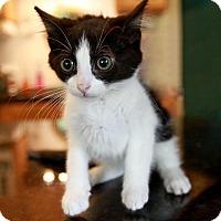 Adopt A Pet :: Ringo - Palatine, IL
