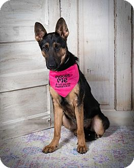 German Shepherd Dog Dog for adoption in Houston, Texas - Morgan Adoption Pendin