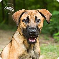 Adopt A Pet :: Everly - Cincinnati, OH