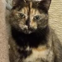 Adopt A Pet :: Norma - Twinsburg, OH