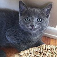 Adopt A Pet :: Bonnie - Austintown, OH
