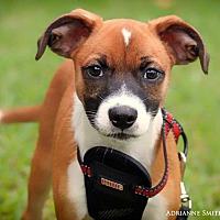 Adopt A Pet :: Solar - Fayetteville, GA
