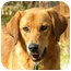 Photo 1 - Retriever (Unknown Type)/Hound (Unknown Type) Mix Dog for adoption in Hagerstown, Maryland - JOSIAH