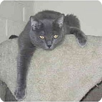 Adopt A Pet :: Kaetu - Scottsdale, AZ
