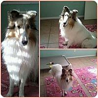 Adopt A Pet :: Hubble - Riverside, CA