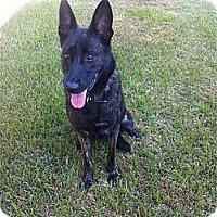 Adopt A Pet :: Karley in So CA - Jamestown, CA