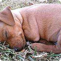 Adopt A Pet :: Mason - Florissant, MO