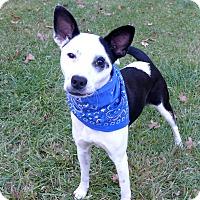 Adopt A Pet :: Breezy - Mocksville, NC
