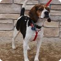 Adopt A Pet :: Bobby McGee - Norman, OK