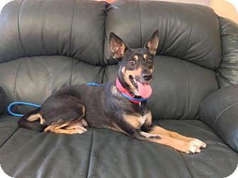 Shepherd (Unknown Type) Mix Dog for adoption in Maquoketa, Iowa - Nahla