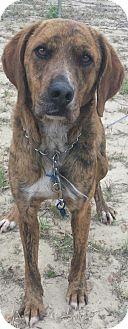 Plott Hound Mix Dog for adoption in Macon, Georgia - Otis