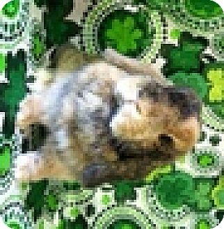 Lop-Eared Mix for adoption in Paramount, California - Astrid