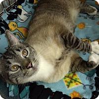 Adopt A Pet :: Kai - Byron Center, MI
