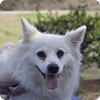Adopt A Pet :: Fiesty of  Murphy NC - Mooresville, NC