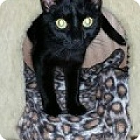 Adopt A Pet :: Shayla - McHenry, IL