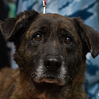 Adopt A Pet :: Nelly - Evansville, IN